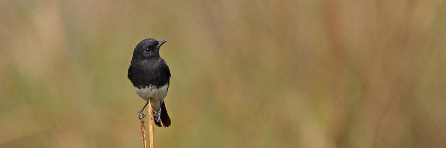 Birding Tour in India